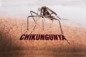 Chikungunya epidemic mathura